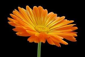 اكتب اسمك وشوف من أي الورود أنت ؟ Im006